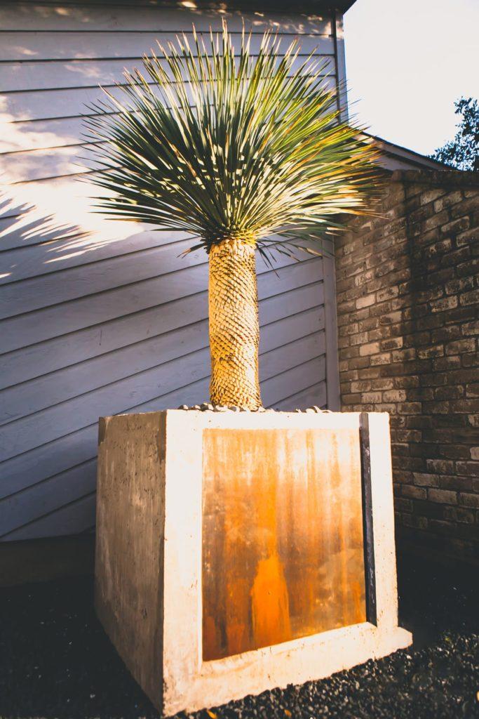 Casa Victoria custom landscape design by LUSH Greenscape Design in San Antonio, TX