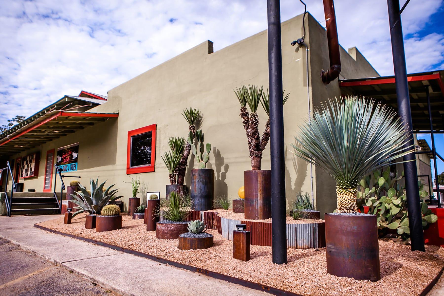 landscape design native plant cactus detail