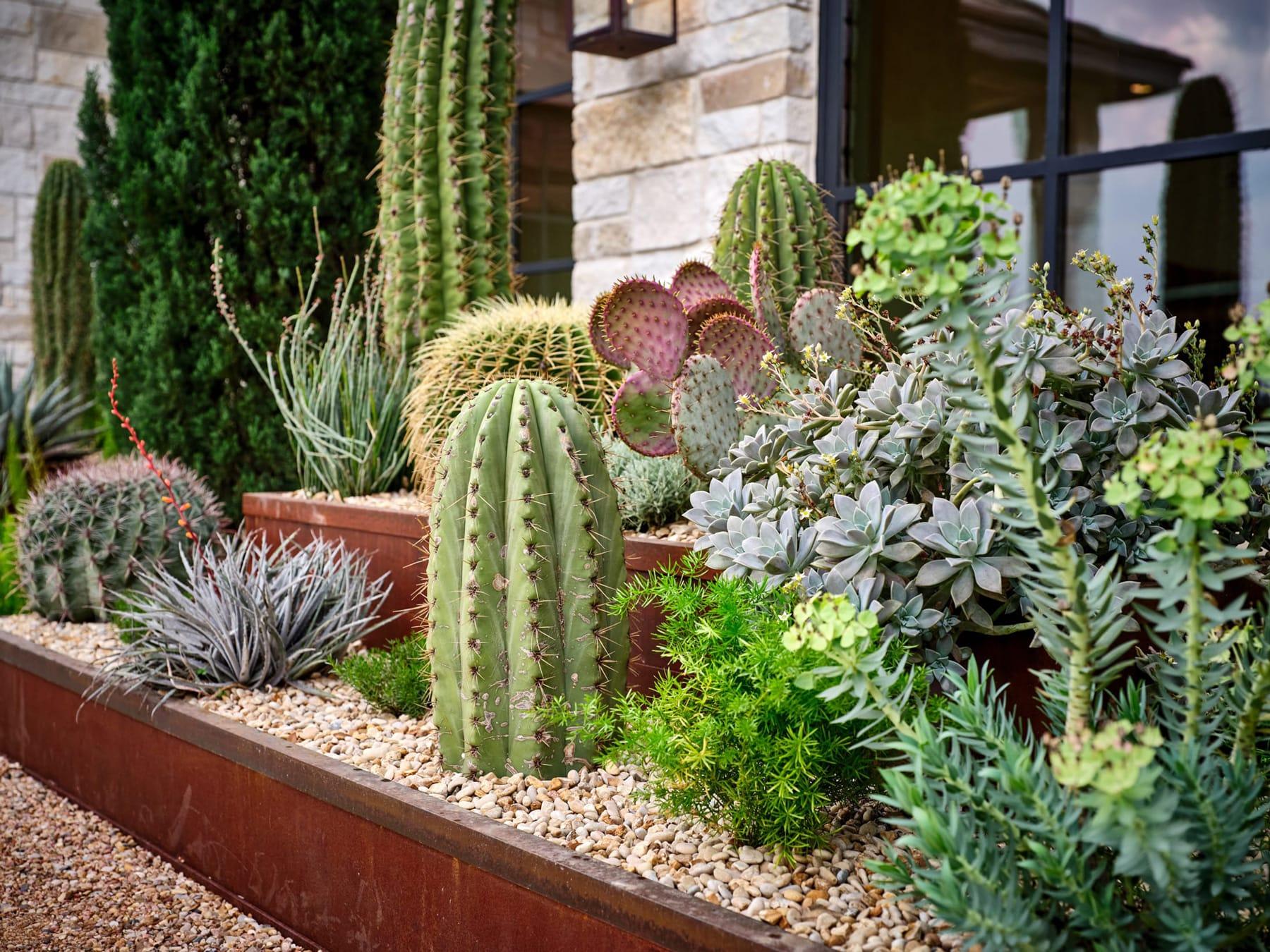 Blanton Residence sustainable landscape design in Gruene, TX by LUSH GreenScape Design