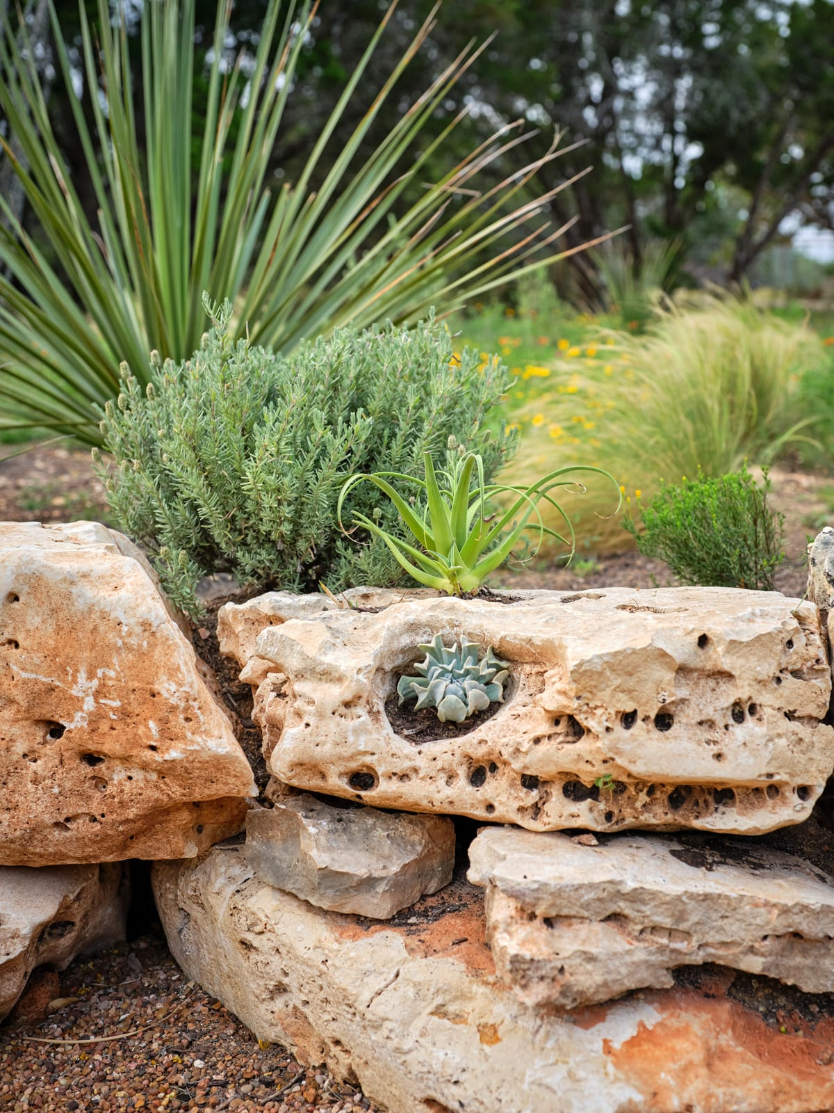 Doehne Oaks sustainable landscape design in New Braunfels, TX by LUSH GreenScape Design